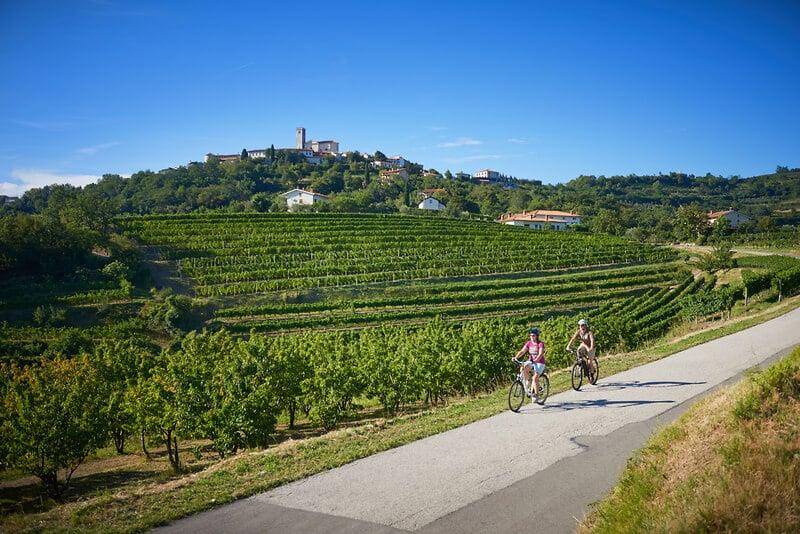 Fietsen door Sloveense wijngarden